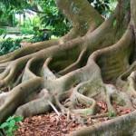 Mencari Akar Permasalahan (Root Cause)